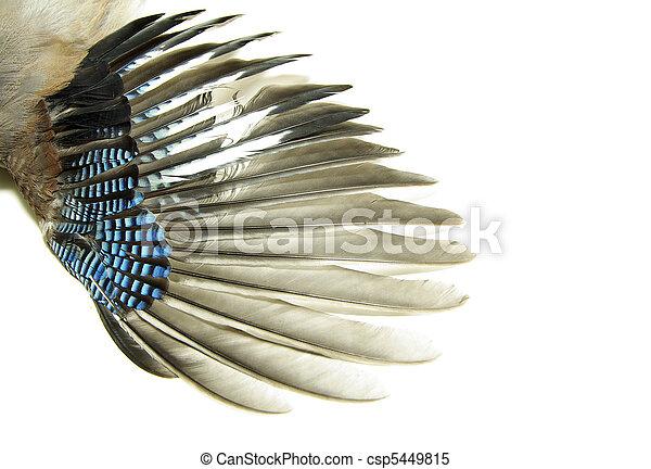 wings  - csp5449815