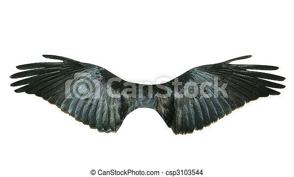 wings  - csp3103544