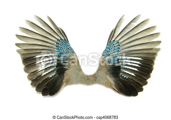 wings - csp4068783