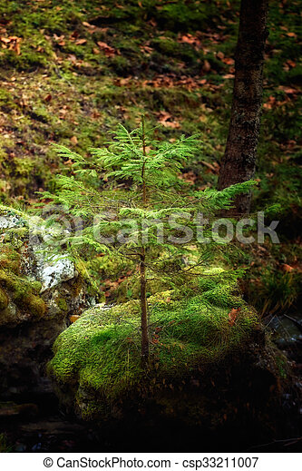 winning sprit of a tree grew on a rock. Soft focus, blured background, low key, dark background, spot lighting, and rich Old Masters - csp33211007