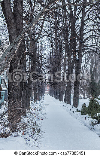 Winter alley in the snow - csp77385451