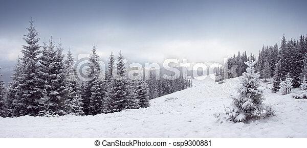 winter- bäume - csp9300881