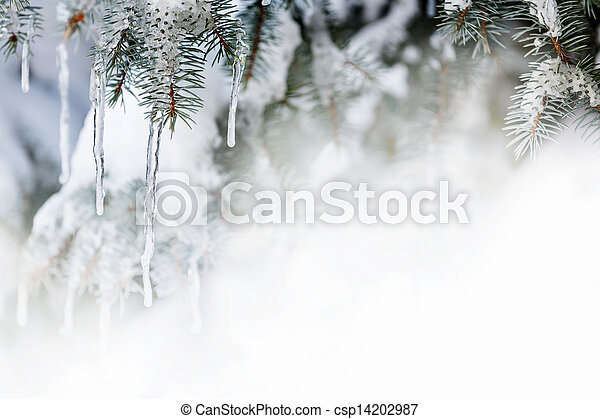 Winter background with icicles on fir tree - csp14202987