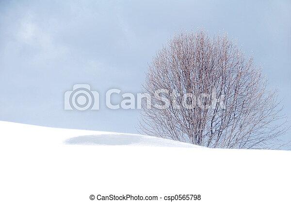 winter blues - csp0565798