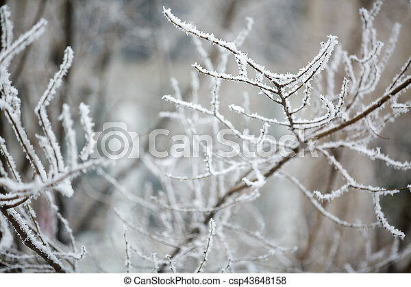 Winter branches of trees in hoarfrost - csp43648158