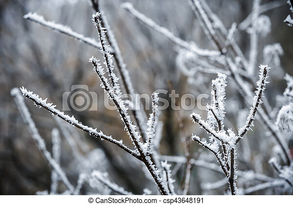 Winter branches of trees in hoarfrost - csp43648191