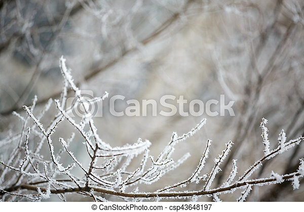 Winter branches of trees in hoarfrost - csp43648197