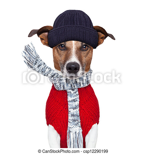 winter dog scarf and hat - csp12290199