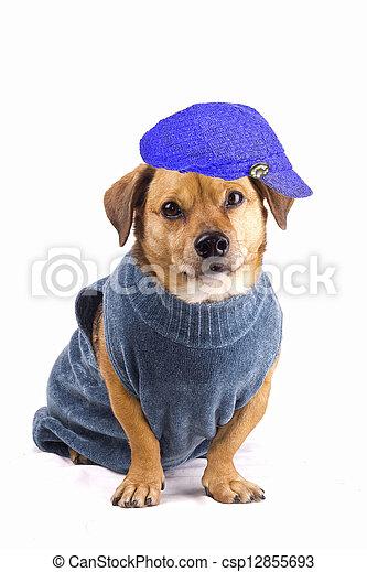 winter dog - csp12855693