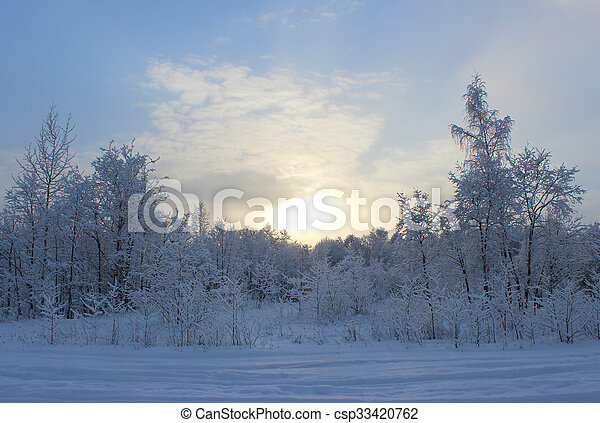Winter forest after a snowfall on Christmas in the dead of winter in January. - csp33420762