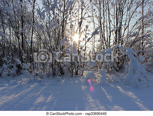 Winter forest after a snowfall on Christmas in the dead of winter. - csp33690440