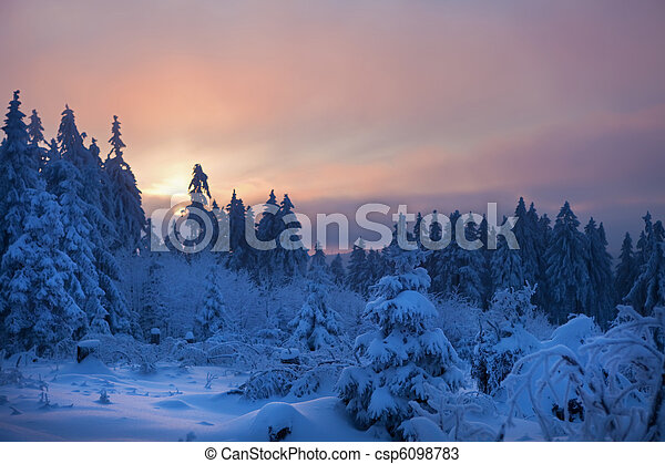 winter forest in mountains - csp6098783