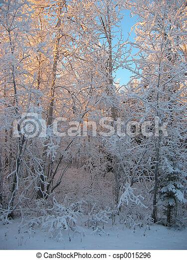 Winter Forest - csp0015296