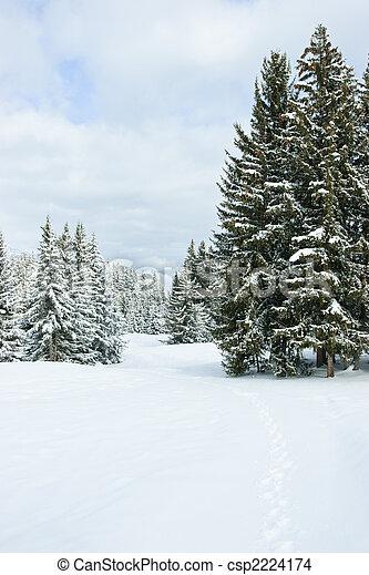 Winter Forest - csp2224174
