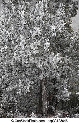 Winter Frost - csp33138046
