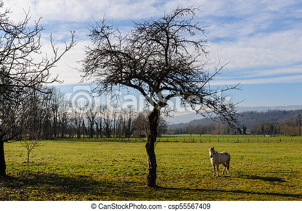 Winter in the Savoy Area in Southern France - csp55567409