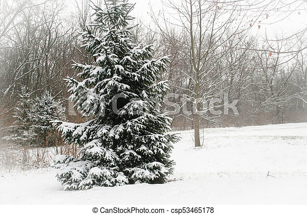 Winter in wooded countrysie - csp53465178