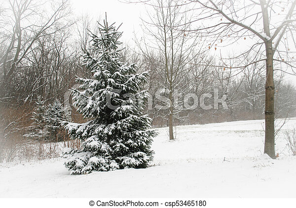 Winter in wooded countrysie - csp53465180