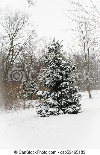Winter in wooded countrysie - csp53465183