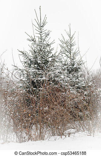 Winter in wooded countrysie - csp53465188