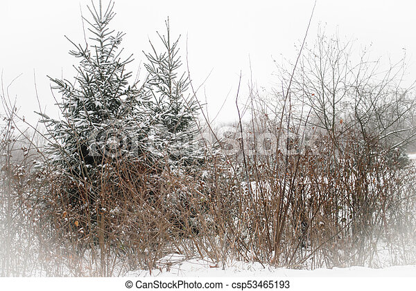 Winter in wooded countrysie - csp53465193