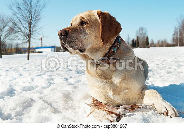 winter, labrador - csp3801267