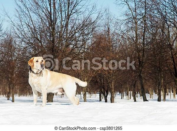 winter, labrador - csp3801265