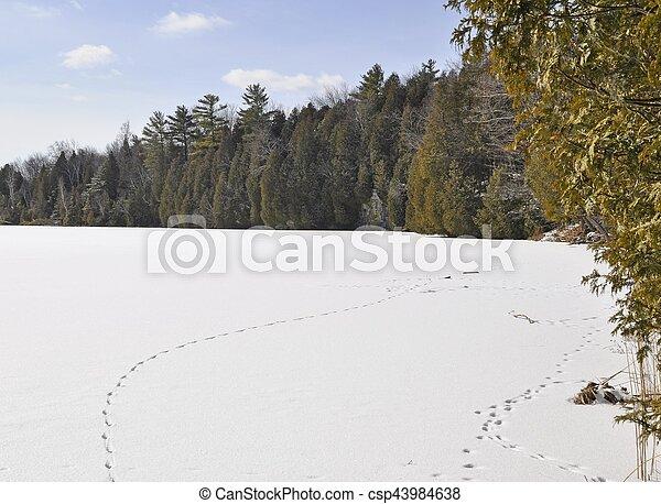 Winter lake landscape - csp43984638