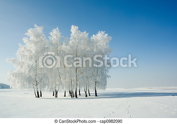 Winter landscape and trees - csp0982090