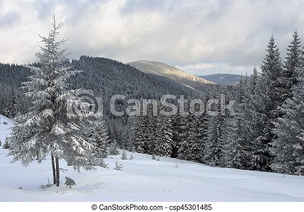 Winter landscape in the Carpathian mountains - csp45301485