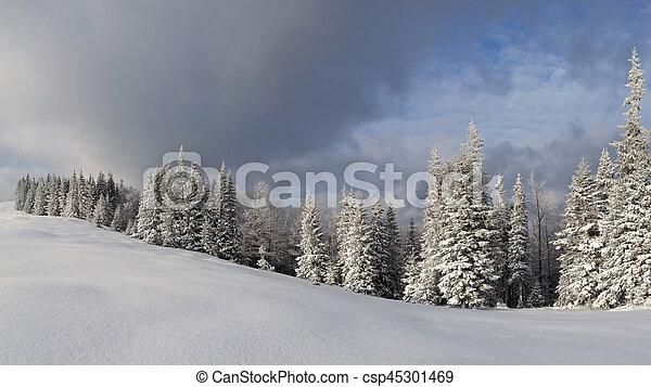 Winter landscape in the Carpathian mountains - csp45301469