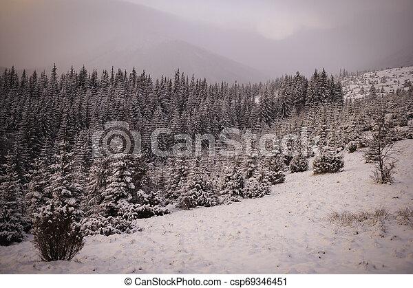 Winter landscape in the Carpathian mountains - csp69346451