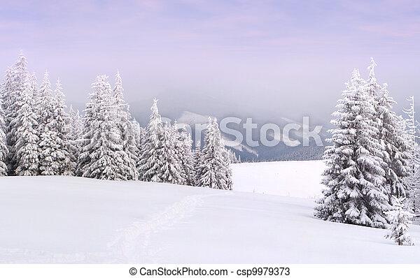 winter landscape in the Carpathian mountains - csp9979373