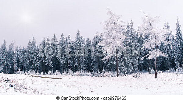 winter landscape in the Carpathian mountains - csp9979463