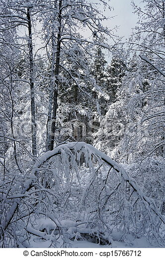 Winter landscape in the forest  - csp15766712