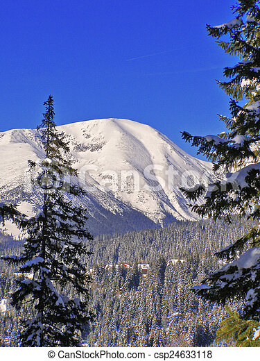 Winter landscape in the forest - csp24633118