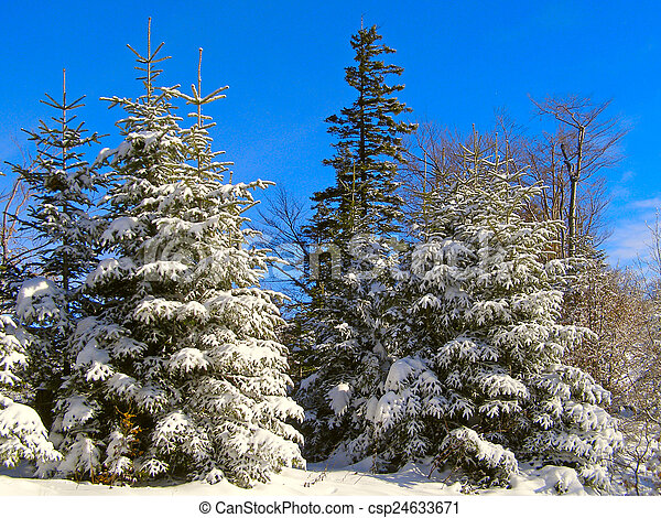 Winter landscape in the forest     - csp24633671