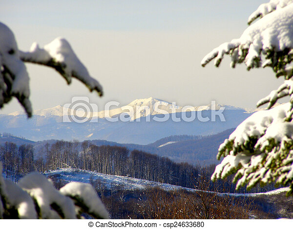 Winter landscape in the forest     - csp24633680