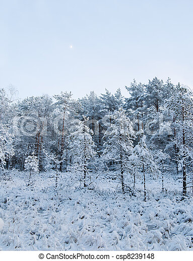 winter landscape in the forest  - csp8239148
