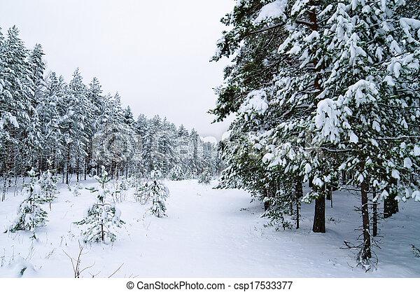 Winter landscape in the forest snowbound - csp17533377