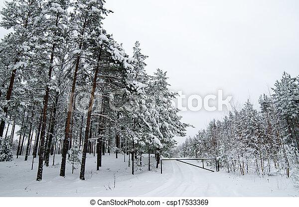 Winter landscape in the forest snowbound - csp17533369