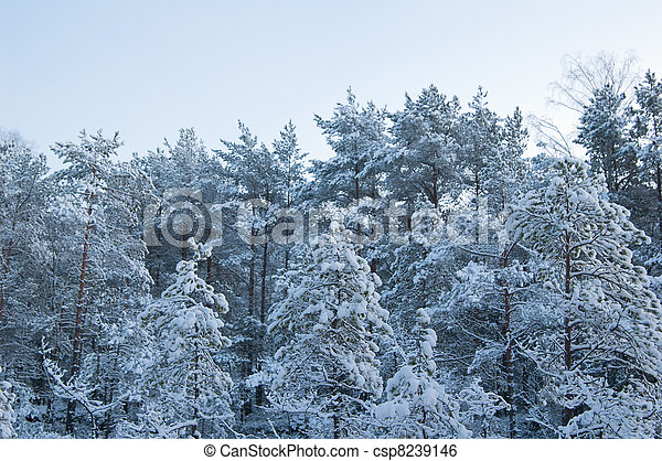 winter landscape in the forest  - csp8239146