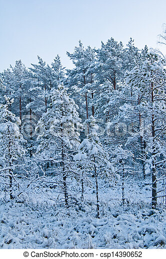 winter landscape in the forest  - csp14390652