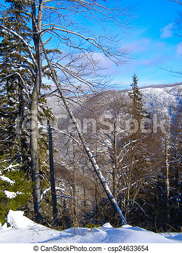 Winter landscape in the forest - csp24633654
