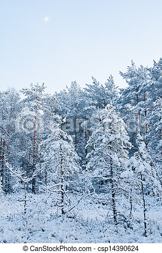 winter landscape in the forest  - csp14390624