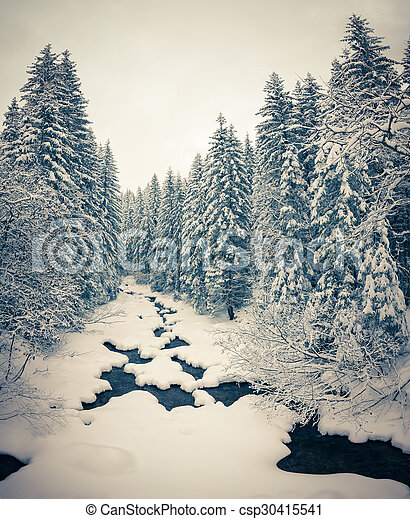 Winter landscape in the forest.  - csp30415541