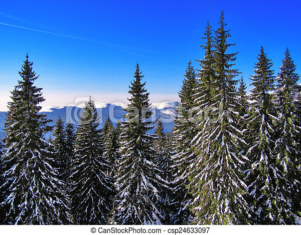 Winter landscape in the forest - csp24633097