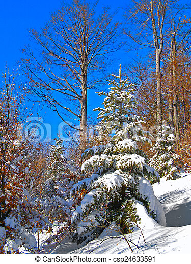 Winter landscape in the forest - csp24633591