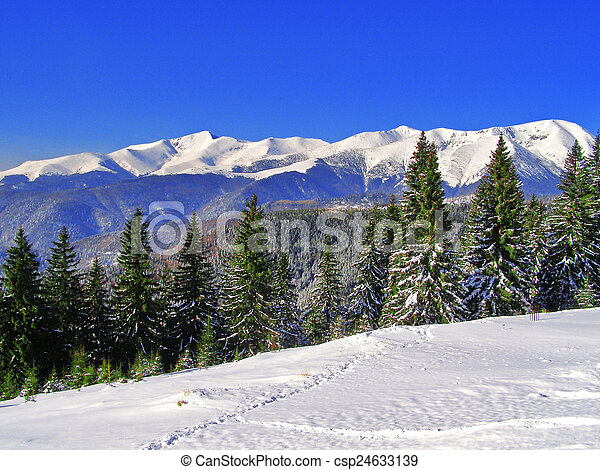 Winter landscape in the forest - csp24633139