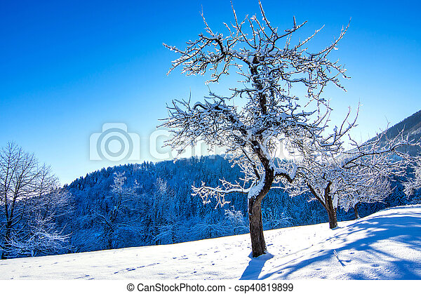 Winter landscape in the morning. - csp40819899